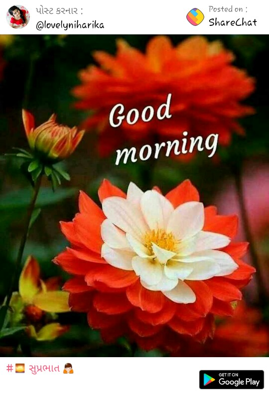 Good Morning All Have Nice Day